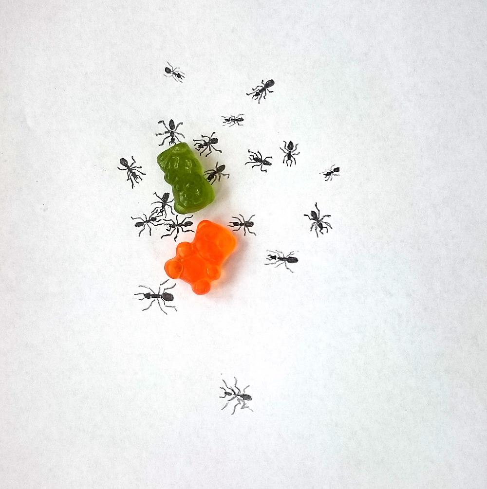 7. den - Zvíře, kterého se bojím (s mravencema v domě bojujeme už šestým rokem, na jaře zase přijdou...)
